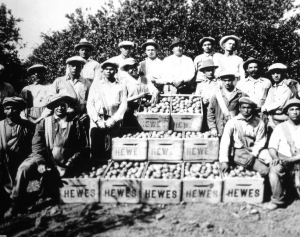 Citrus workers at the Hewes ranch in Tustin in the 1920s. Photo: Orange County Archives, County Recorders office.